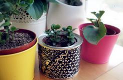 舊鐵罐子變費為寶 DIY手工制作小花盆
