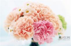 母親節送康乃馨 不同顏色康乃馨寓意