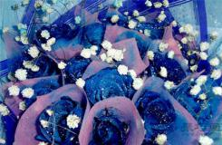 藍色妖姬的傳說故事完整版 清純和敦厚善良的愛