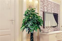 發財樹有毒嗎?發財樹能放在臥室養殖嗎?