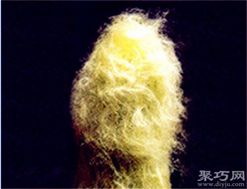 多肉植物翁柱的養殖方法及繁殖方法