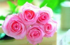 1月25日生日花:圣诞玫瑰 圣诞玫瑰花语
