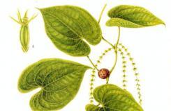 8月15日生日花:黄药子 黄药子花语