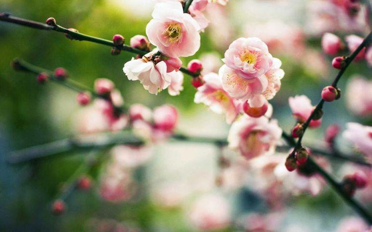 有关春分节气的二十四节气图片