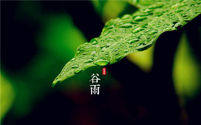 谷雨节气唯美图片