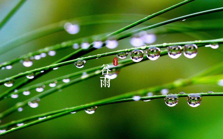 有关谷雨节气的二十四节气图片