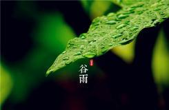 谷雨節氣有什么風俗 二十四節氣谷雨民俗文化介紹