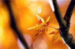 秋分节气有什么风俗 二十四节气秋分民俗文化介绍