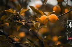 唯美秋分图片大全 多张秋分节气图片分享