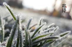 24节气霜降由来 二十四节气霜降节气介绍