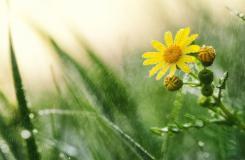 唯美雨水圖片大全 多張雨水節氣圖片分享