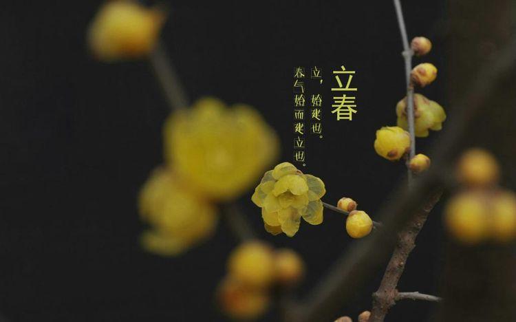 有关立春节气的二十四节气图片