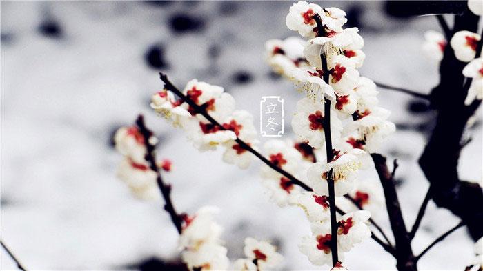 24節氣之立冬節氣圖片大全