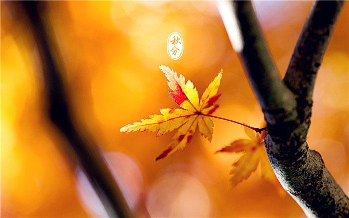 秋分节气唯美图片
