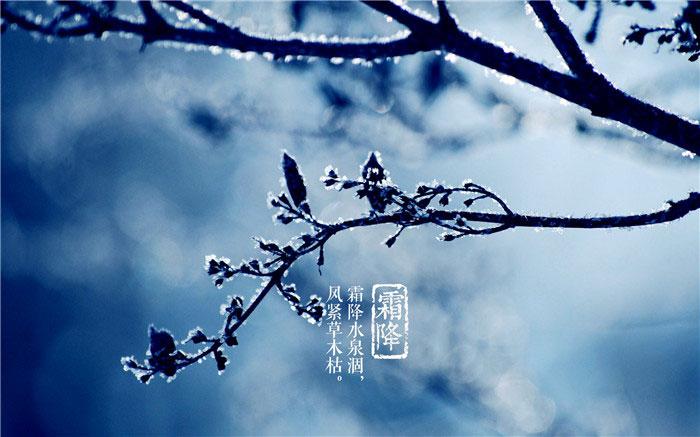 霜降节气唯美图片