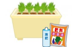 胡蘿卜種植的要點 栽培紅蘿卜施肥注意事項