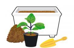 茄子�N植新手必�� 土壤 �h境 幼苗的�x��