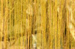 二十四節氣西湖圖片 最美西湖