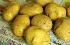 储存土豆方法 土豆怎么保存不发芽