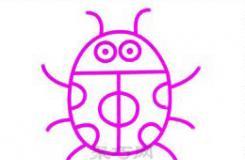 简笔画教程教你怎么画一只可爱的七星瓢虫