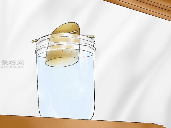 怎么培育红薯幼苗 5