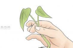 怎么培育红薯幼苗 来看种植红薯的方法