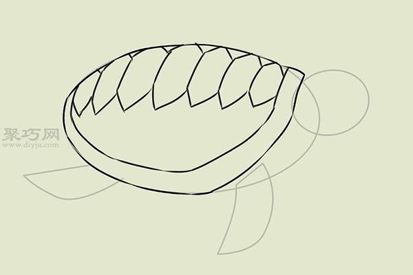 画画真实的乌龟的步骤 13