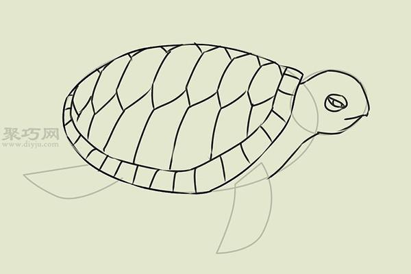 画画真实的乌龟的步骤 15