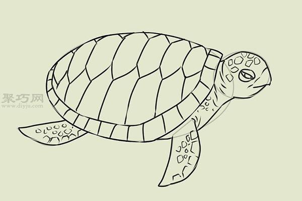 画画真实的乌龟的步骤 17