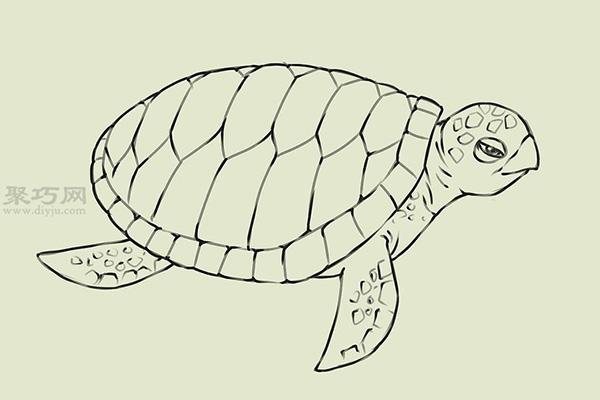 画画真实的乌龟的步骤 18