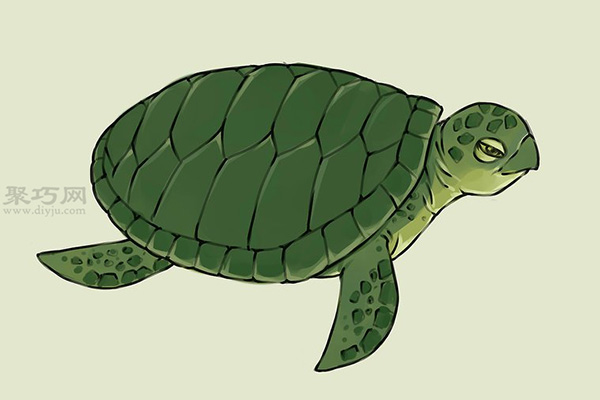 画画真实的乌龟的步骤 19