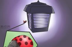 如何物理驱除瓢虫 教你驱赶瓢虫的方法