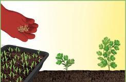 如何移植幼苗 教你播种的方法