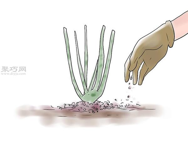 种植玫瑰花教程图解 9