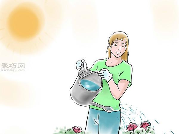 种植玫瑰花教程图解 10
