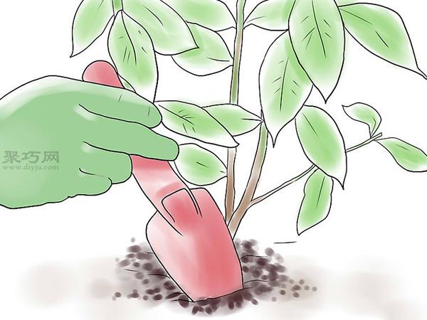 种植玫瑰花教程图解 11