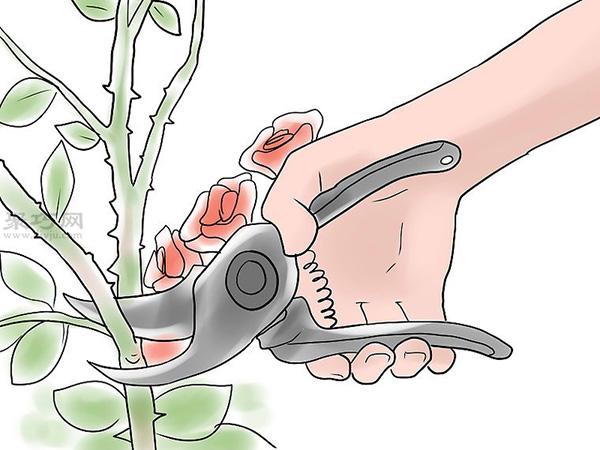 种植玫瑰花教程图解 12