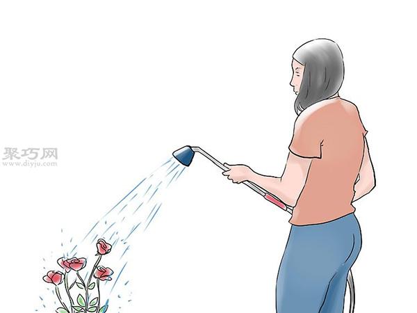 种植玫瑰花教程图解 14