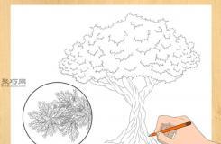画水果树的步骤 一起学如何画树