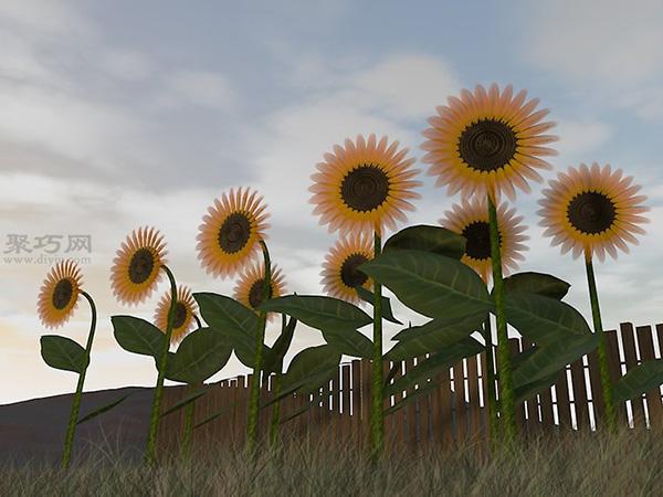 收获葵花籽图片教程 1