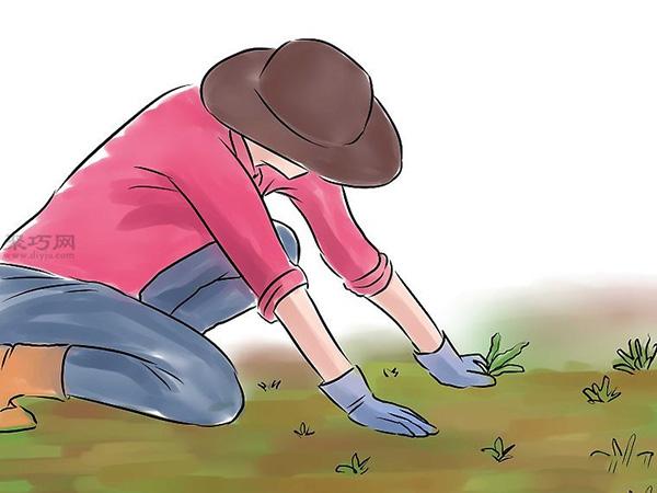 种黄瓜图片教程 3