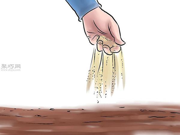 种黄瓜图片教程 4