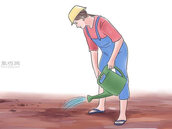 种黄瓜图片教程 9