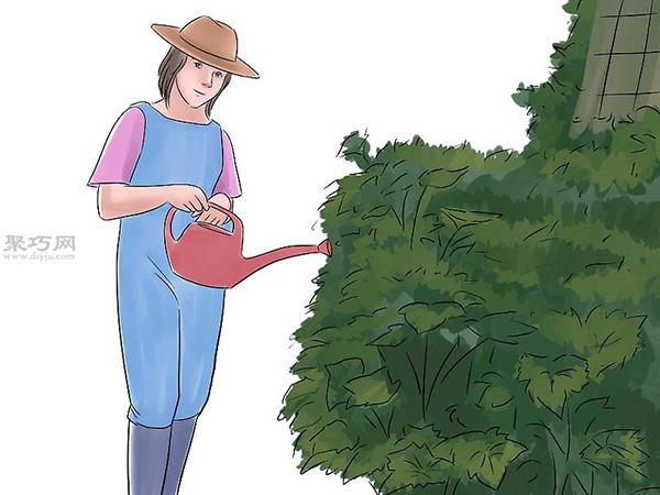 种黄瓜图片教程 13