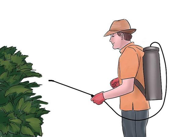 种黄瓜图片教程 15