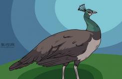 雌孔雀画法步骤 一起学如何画孔雀
