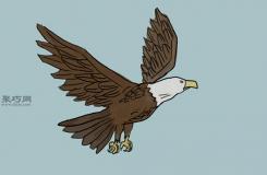 画传统的老鹰的步骤 一起学如何画老鹰