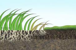 怎样减少适宜苔藓生长的条件 除掉草坪苔藓教程图解