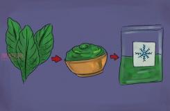 怎样收获和使用罗勒 种植罗勒图片教程