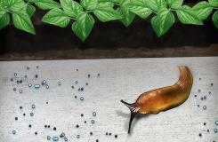 怎么样使用化学方法防治无壳蜗牛 驱赶无壳蜗牛图解教程